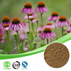 Natural Echinacea Extract,Echinacea Extract Powder,Echinacea Polyphenol 4%