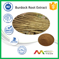 NSF-cGMP Manufacturer High Quality Free Sample Burdock Root Extract