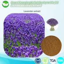 100% Natural Dried Lavender Extract for Making Perfume