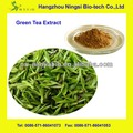extracto de té verde polifenoles del té