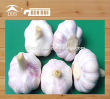 normal white garlic 6cm fresh red garlic 6cm fresh red garlic