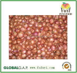 2015 100% Fresh shallot onion in China