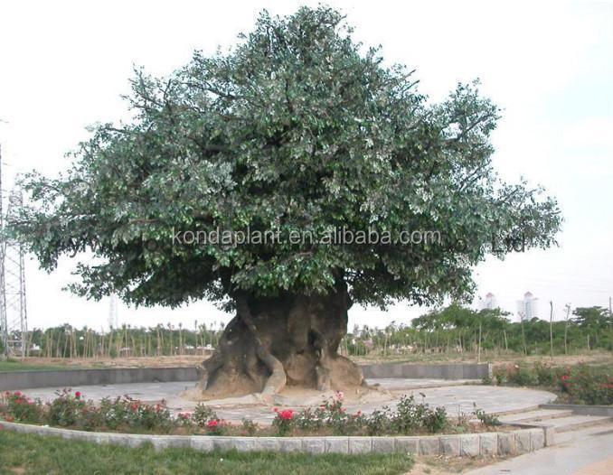 2015 meilleures ventes artificielle grand arbre grand for Solde plante exterieur