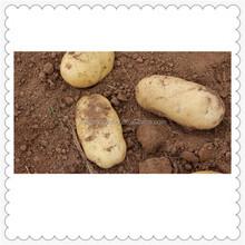 fresh potato market