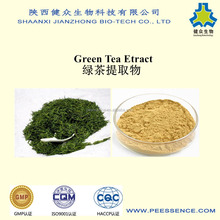 Factory Supply 100% Natural 50% Green Tea Extract Herbal Extract