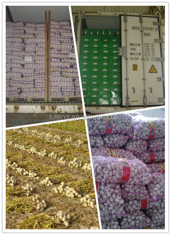 2014 new crop nature garlic price for wholesale garlic