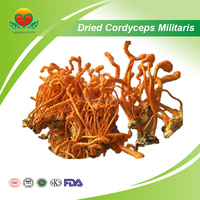Manufacturer Supply Dried Cordyceps militaris
