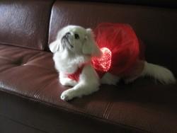 2015 beautiful luminous fiber clothes clothing coat dog apparel pet