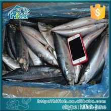 Frozen Indian Mackerel Cheap Price - No blood