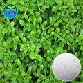 Natural puro de hoja de stevia extracto/steviosido, ra