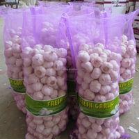 2014 Cold Storage Garlic Price in China