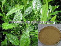Very hot sales Green Tea Extract 50% polyphenols at lowest price