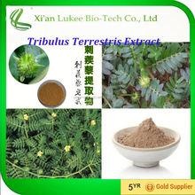 GMP Supplier 100% tribulus p.e/tribulus terrestris plant extract powder for sale