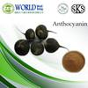 Organic Black Radish Extract Black Radish Powder Anthocyanidin