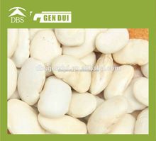 types of white beans price Large white kidney bean white kidney bean
