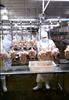 500/1000/2000/3000bph chicken/duck/goose/rabbit processing line slaughter equipment