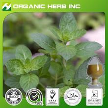 Natural Marrubium vulgare horehound Extract 12:1