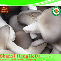 stable quality quick delivery oyster mushroom spawn for sale
