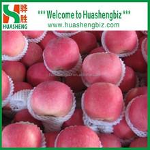 New season Bulk Fresh fuji apple fruit/ Apple prices