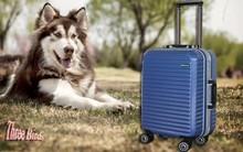 HEBEI baigou luggage/three birds travel box suitcase boxes