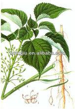Chinese Herb Ramie Extract Powder