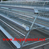 Hebei Dingtuo 3 Tiers Or 4 Tiers layer Chicken Cage for Sale