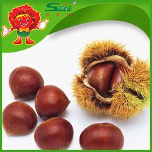 Venta caliente china frutos secos frescos castaña