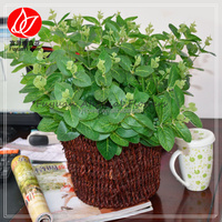 140160 Excellent quality professional Decorative Flowers & Wreaths cheap wholesale leaf artificial plant