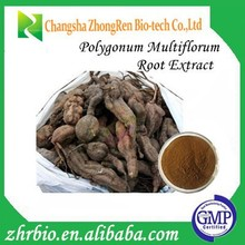 GMP Certification Pure Natural High Quality Polygonum Multiflorum Root Extract 20:1