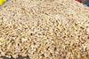 chinese good farmer ginger for buyer of ginger