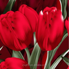 100% polyester tulip style printed & dyed fabric