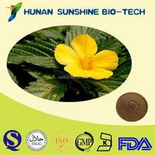 Herbal Raw Material Sexual Energy Product Damiana Leaf P.E.