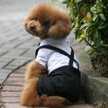 ropa para perros productos para mascotas