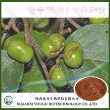 Botanical medicine extract manufacturer supply pygeum africanum extract