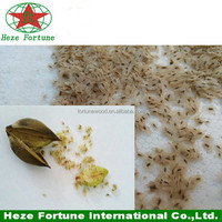 Best price paulownia shan tong seeds supply in November