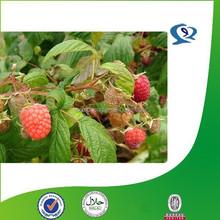 raspberry fruit extract/ raspberry p.e./ natural raspberry powder