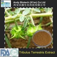 40% Saponins 100% Natural Pure Tribulus Terrestris Extract