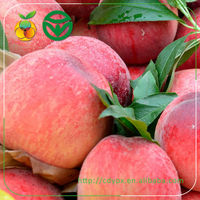 global direct peach from Chinese suppliers of fruit