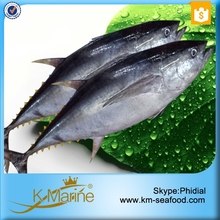 Frozen Fish Yellow Fin Tuna