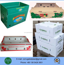 PP Plastic Corflute Fruit and Vegetable Packaging Trays/Boxes