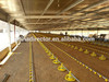 four season fitting steel structure prefab chicken house for sale