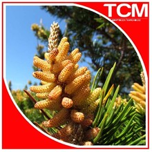 pine pollen/pollen pinin powder rich in amino acids and protein without side effects