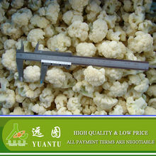 China IQF Frozen Cauliflower Best Selling Products