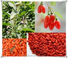 Organic Raw Goji berries/Dried goji berry packed 500pcs/50g 4x5kg