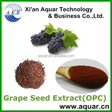 manufacturer sell Grape Seeds for sale Extract with Polyphenols 95% by UV