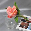 Flor del tulipán fresco
