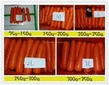 carrot supplier from China