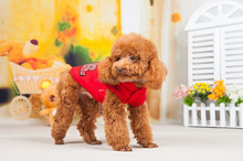 Winter dog outdoor clothes pet product manufacturer dog cool winter coat