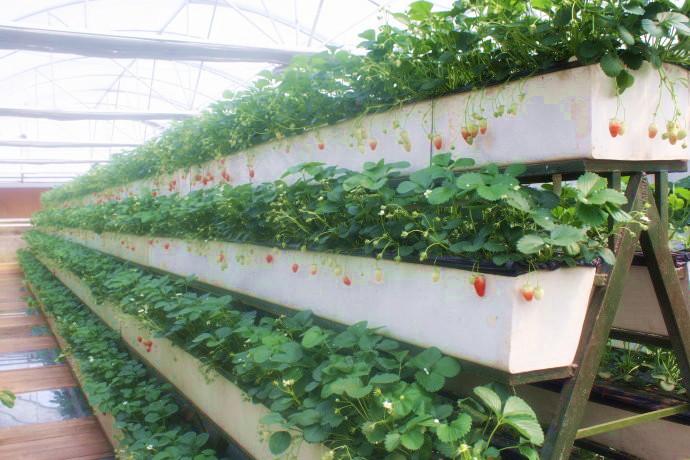 Оборудование для выращивания ягод 59