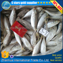 best selling seafood horse mackerel(Trachurus japonicus ) for sale